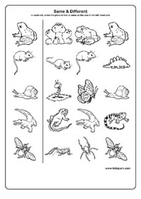 Kindergarten Activity Sheet For Same And Different Activity Sheets
