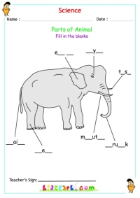 Elephant Body Parts Name http://www.kidzpark.com/kids-activity-sheets/science-animals/340/