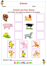 math worksheet : animals worksheet for kids science activity sheet : Animals And Their Babies Worksheets For Kindergarten