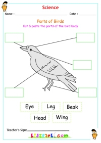 See more : Animals Worksheets
