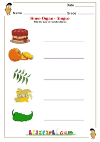 Sense Organs - Tongue, Grade 1 Science Worksheet