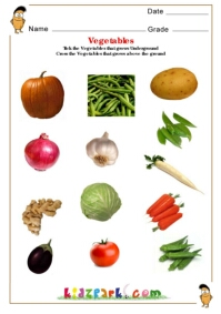 Fruits Amp Vegetables Science Worksheets For Kindergarten