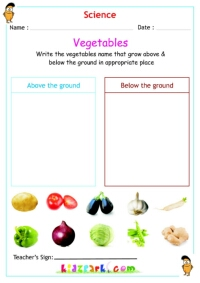 Vegetables that grow below and above the ground, Kids Worksheets