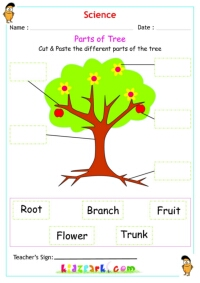 Plants & Trees Science Worksheet for Kids