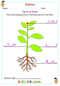 math worksheet : plants  trees science worksheet for kids : Plant Worksheets For Kindergarten