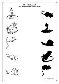 Reptiles Worksheets,Home Schooling Worksheets,Grade 1 Worksheets